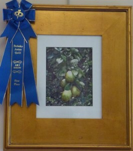 Watercolor 1st Place Pears by Trish Emery